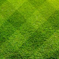 Lawn Care Chislehurst