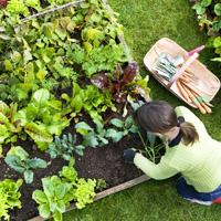 Garden Maintenance Chislehurst