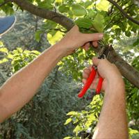 Tree Pruning Chislehurst