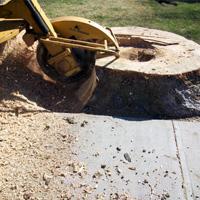 Stump Grinding Chislehurst