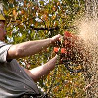 Tree Removal Chislehurst