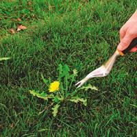 Weeding & Pruning Chislehurst